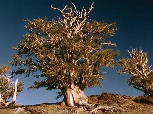 Documentaire Arbres – Baobab