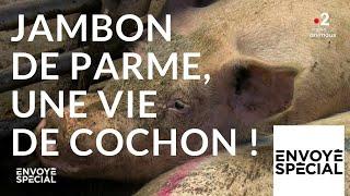 Documentaire Jambon de Parme,  une vie de cochon !