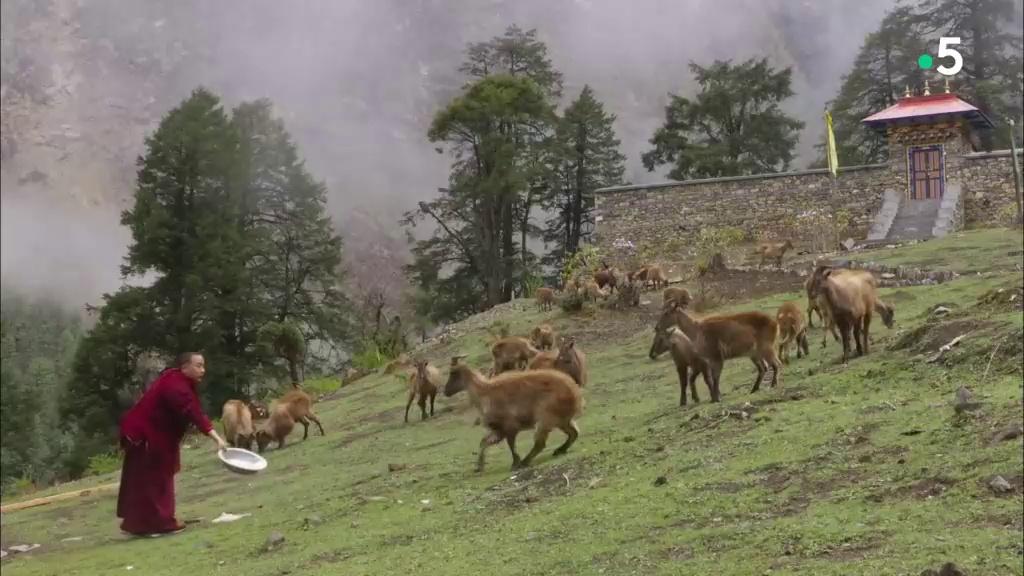 Documentaire Manaslu, royaume fragile de l'Himalaya