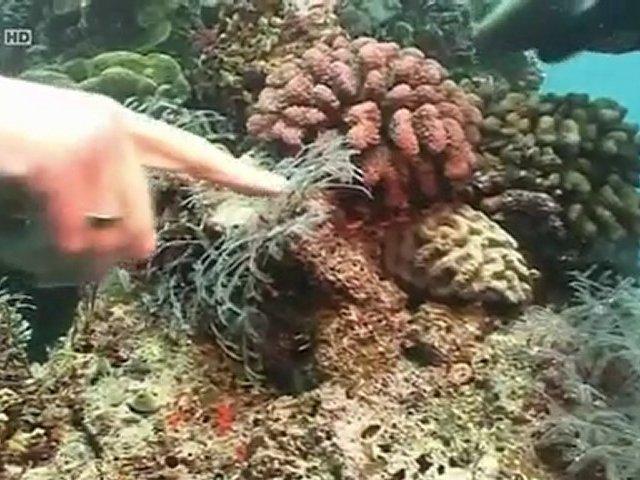 Documentaire Australie, continent venimeux