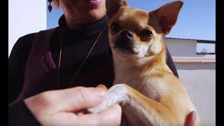 Documentaire Nos animaux de compagnie sont en danger !