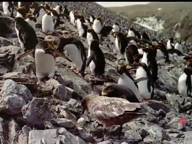 Documentaire Survival Island