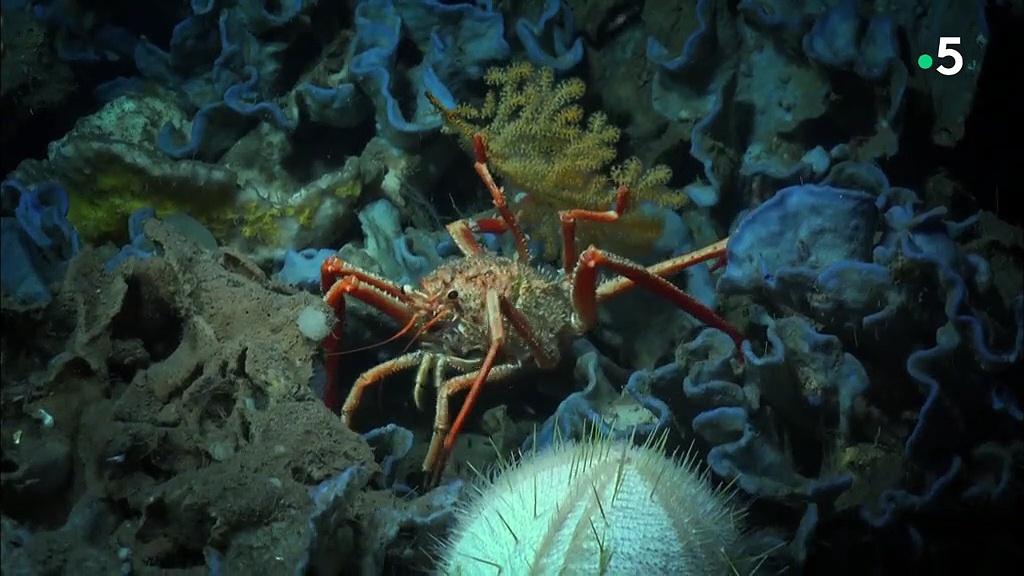 Documentaire Cap sur l'Atlantique – Les entrailles de l'océan