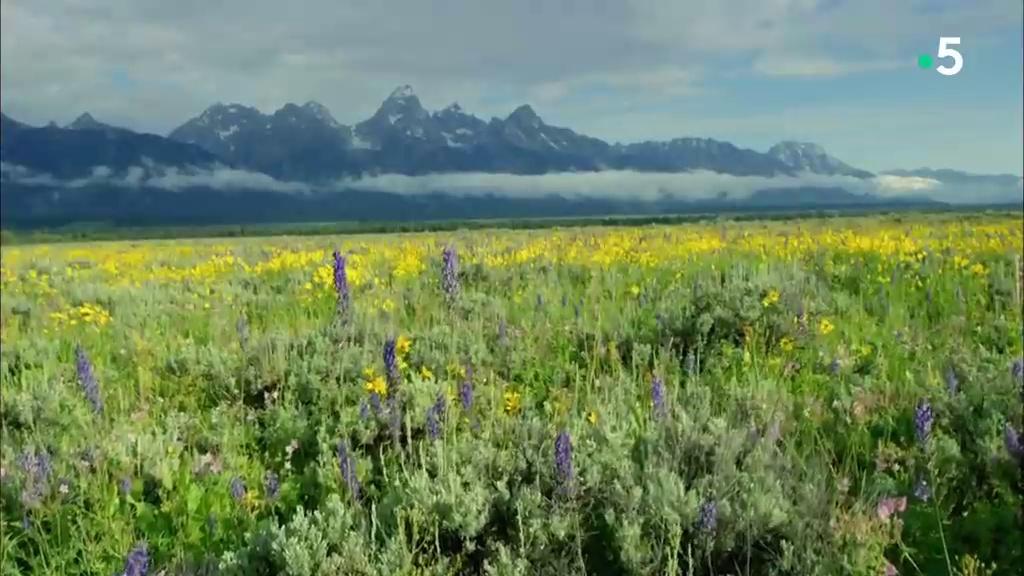 Documentaire L'Ouest américain : dans les montagnes
