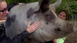 Documentaire La fin de la maltraitance animale ?