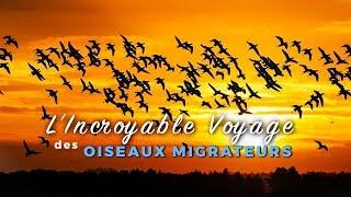 Documentaire Migration, le voyage extraordinaire