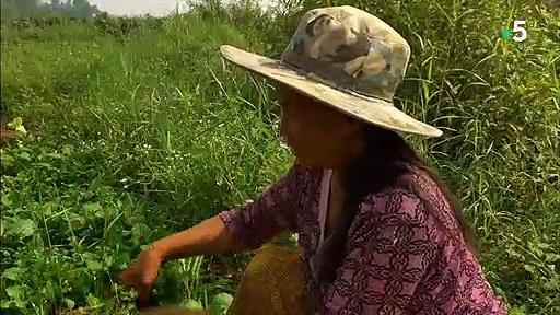 Documentaire Mékong, la mère des rivières