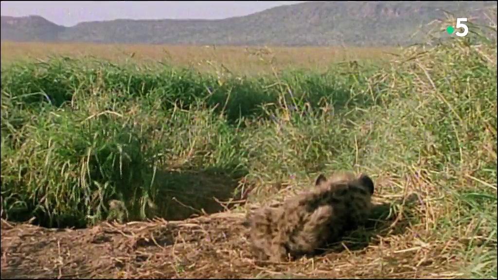 Documentaire Tueurs nés – La hyène