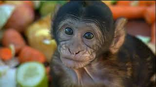Documentaire Animaux trop humains – L'outil animal
