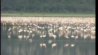 Documentaire Parcs et réserves du Kenya