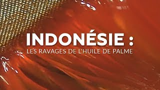 Documentaire Indonésie : les ravages de l'huile de palme