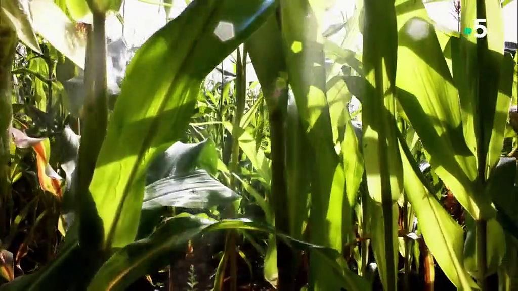 Documentaire Le petit peuple des champs