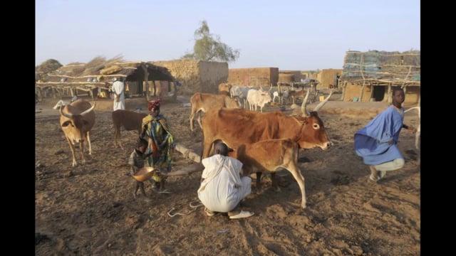 Documentaire Sécurisation de la production agropastorale en Mauritanie