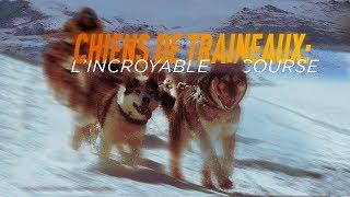Documentaire Chiens de traîneaux : l'incroyable course