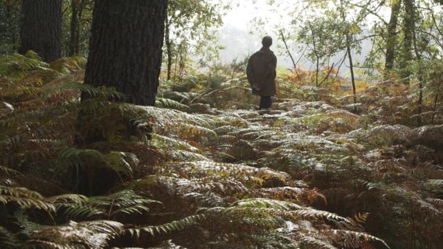 Documentaire La forêt retrouvée