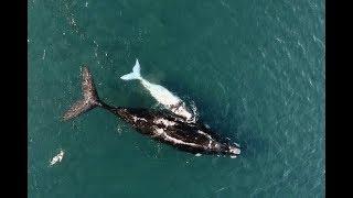 Documentaire À la rencontre des baleines et des manchots de la Péninsule Valdès