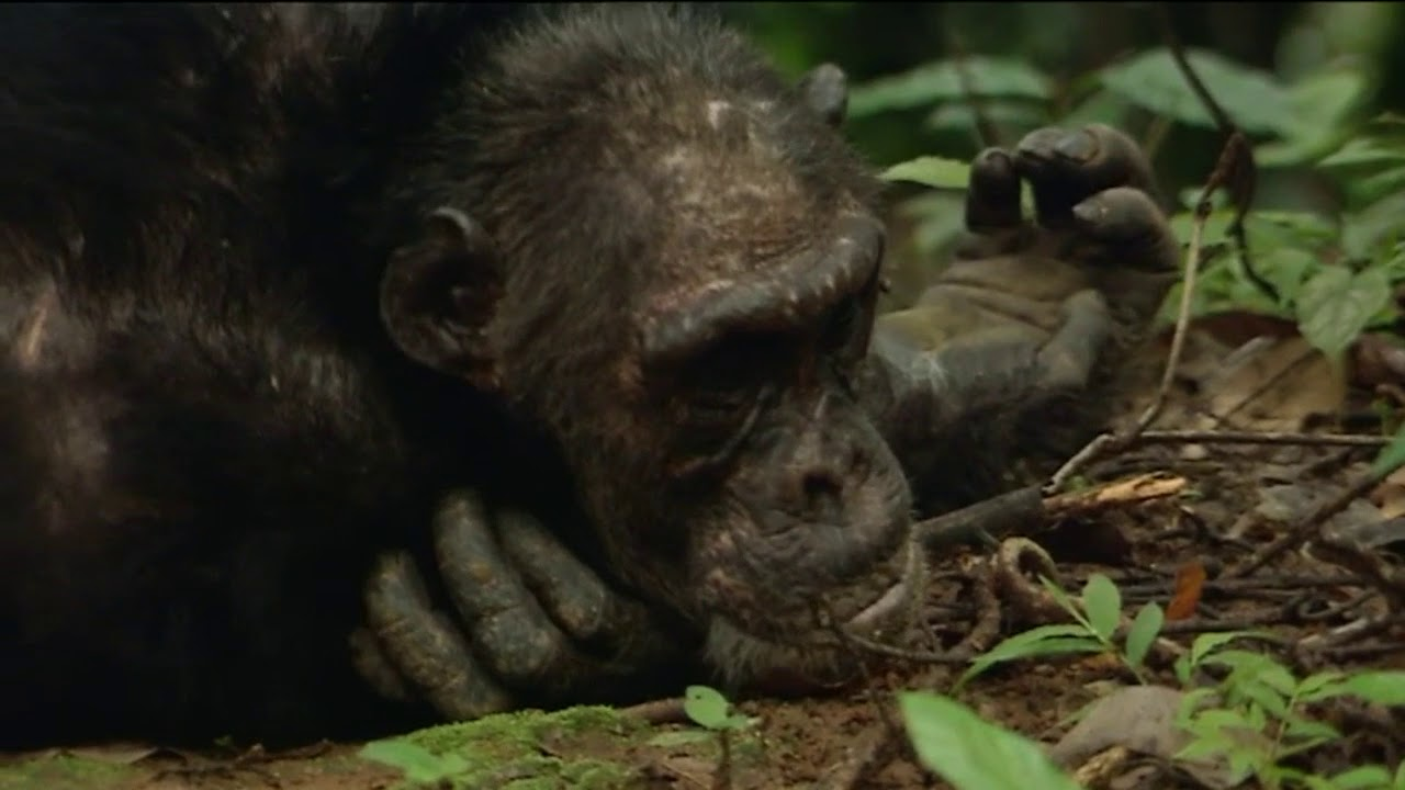 Documentaire Animaux trop humains – Culture animale