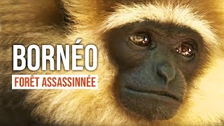 Documentaire Bornéo : la forêt assassinée