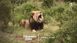 Documentaire Échappées belles – Destination Afrique du Sud