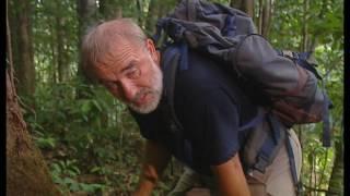 Documentaire Grandeur Nature – La forêt de l'ombre