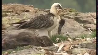 Documentaire Grandeur Nature – Le plateau du Coscione et son écosystème