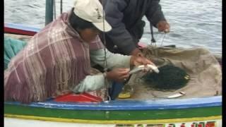Documentaire Grandeur Nature – Les poissons prédateurs de la rivière