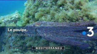 Documentaire L'histoire du poulpe sous toutes ses formes