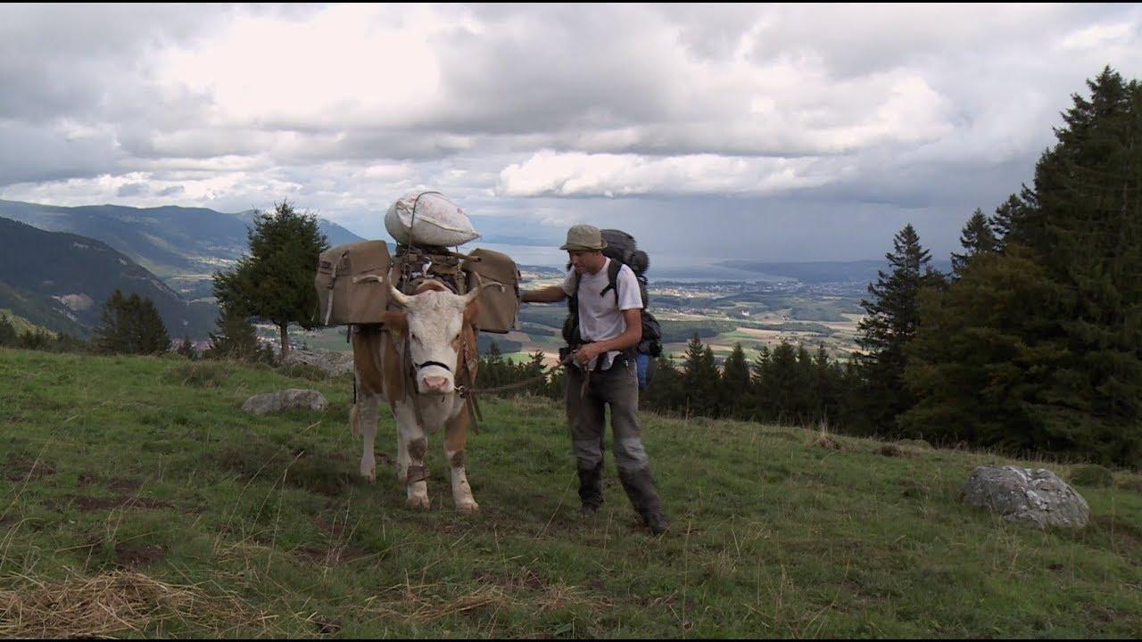 Documentaire Mon bœuf, ma liberté ou l'incroyable histoire d'amour entre un homme et un bœuf