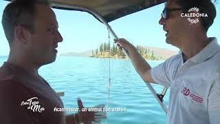 Documentaire Entre terre et mer – L'acanthaster, un animal non grata ?
