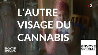 Documentaire L'autre visage du cannabis