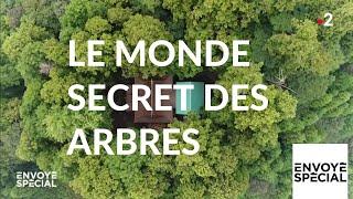 Documentaire Le monde secret des arbres