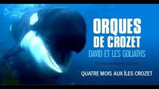 Documentaire Orques de Crozet, ces gigantesques éléphants de mer