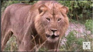 Documentaire Safari dans la savane – Chaque jour est une aventure