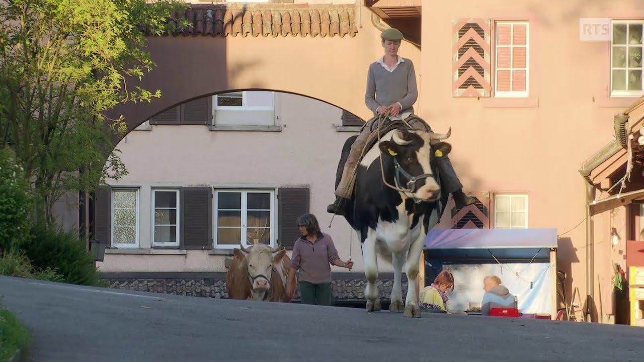 Documentaire A l'école des vaches ou l'art de chuchoter à l'oreille des bovins