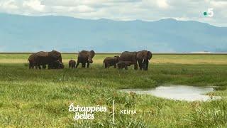 Documentaire Échappées belles – Kenya, un rêve de safari