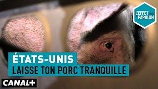 Documentaire États-Unis : laisse ton porc tranquille