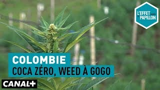 Documentaire Colombie : Coca zéro, weed à gogo