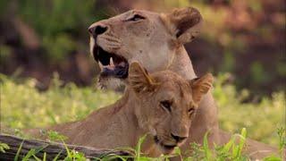 Documentaire La reine lionne