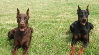 Documentaire Les chiens de garde