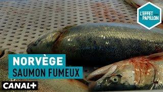 Documentaire Norvège : saumon fumeux