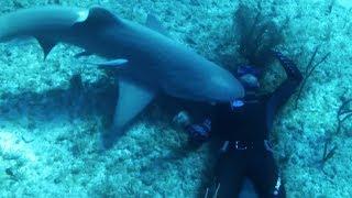 Documentaire Requins, cet homme n'a peur de rien !