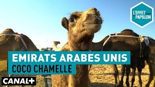 Documentaire Émirats Arabes Unis : coco chamelle