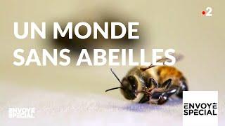 Documentaire Un monde sans abeilles