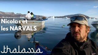 Documentaire Nicolas et les narvals
