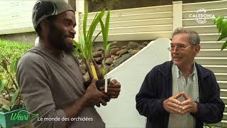 Documentaire Dans le monde des orchidées