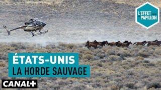 Documentaire États-Unis : la horde sauvage