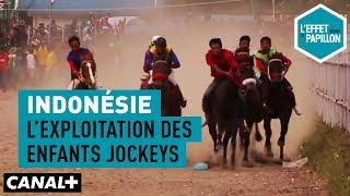 Documentaire Indonésie : l'exploitation des enfants jockeys