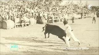 Documentaire Le taureau « le Sanglier » de Cailar