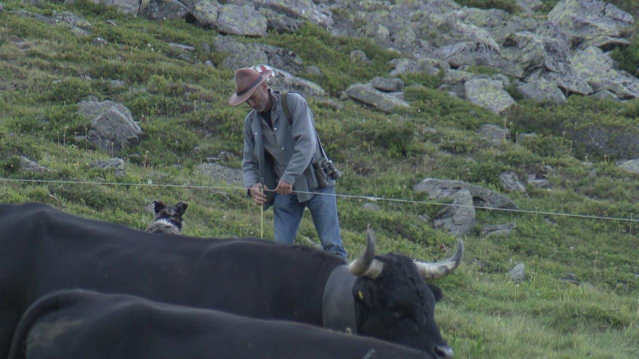 Documentaire Mon alpage pour un fromage