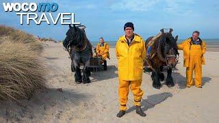 Documentaire Belgique entre ciel et terre – Partie 1 – La Basse Belgique